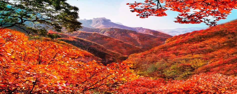 又到红叶烂漫时,万博手机app下载苹果这个景区又要火…